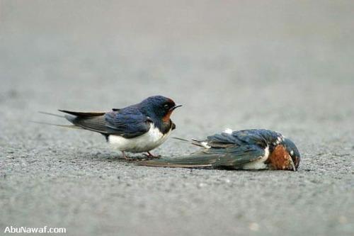pajaro6 - amor y compasión entre pájaros