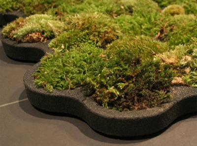 alfombra2 - alfombra de musgo