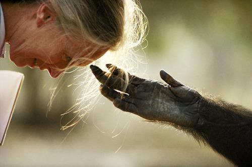 jane goodall mano - Concurso para conocer a Jane Goodall en Madrid en mayo 2009