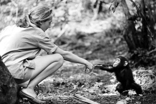jane goodall - JANE GOODALL, una vida a favor de los seres vivos