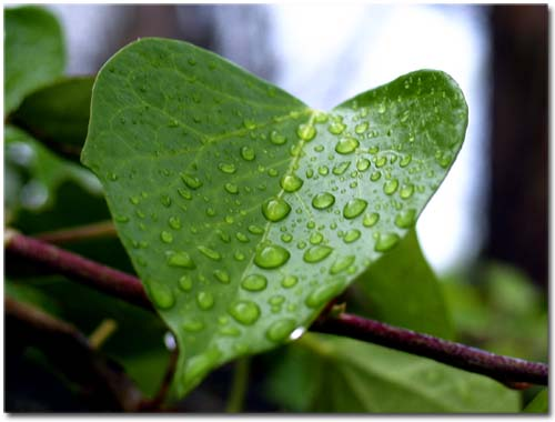 corazon verde - CRÓNICA SOCIAL VERDE: nueva sección en el blog