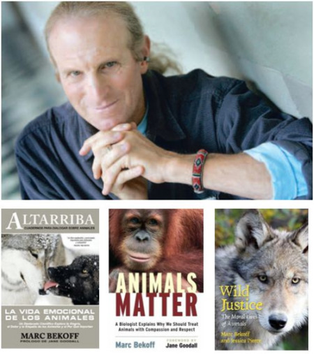 """marc bekoff - MARC BEKOFF, etólogo y experto en conducta animal: """"Los animales aman sin dobleces"""""""