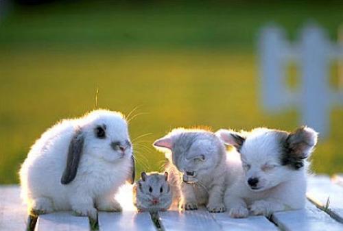 animales terapeutas - ANIMALES TERAPEUTAS: experiencias con chicos con problemas (2/2)