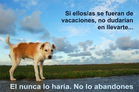 perro abandono - perro-abandono