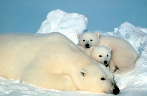 ososblancos - ososblancos