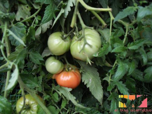 tomatehuertalogo - tomatehuertalogo