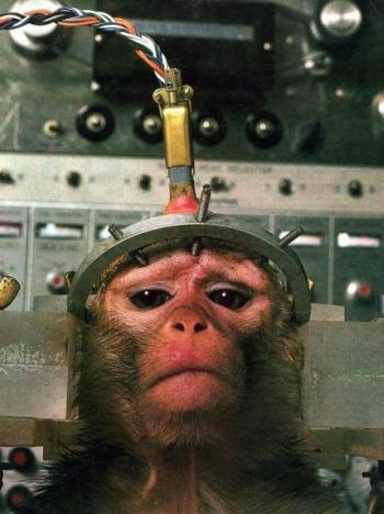 mono maltrato - Experimentación animal: verdugos con bata blanca