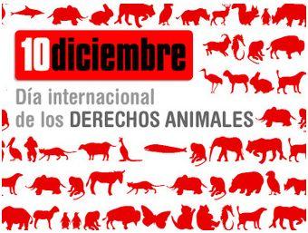 10 diciembre - Día Internacional de los Derechos Animales. 10 de diciembre 2009