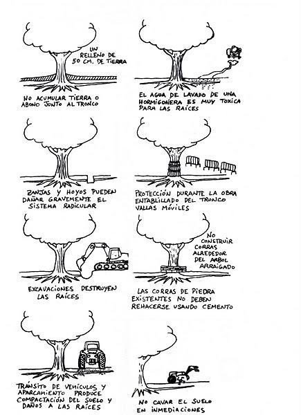 bosques2 - bosques