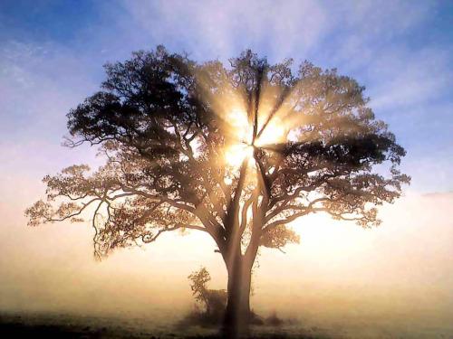 """arbol2 - """"Sangre de árbol"""": poesía y narración desde Chiapas de Roberto Reyes Cortés"""