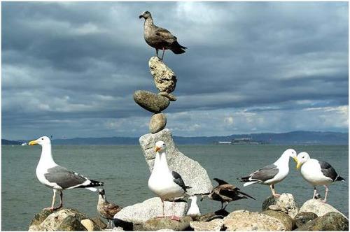 arte piedras - Arte con piedras en equilibrio: talento, naturaleza y mensaje