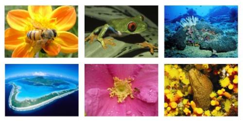 biodiversidad - 2010 Año Internacional de la Diversidad Biológica. Todos podemos hacer algo para conservar la biodiversidad
