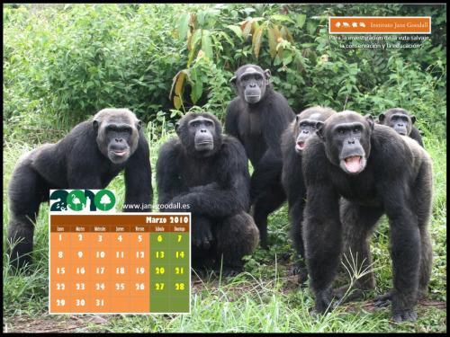 calendario-jane goodall marzo 2010