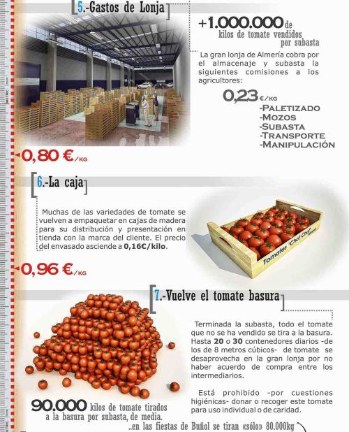 tomate 3 - tomate-3