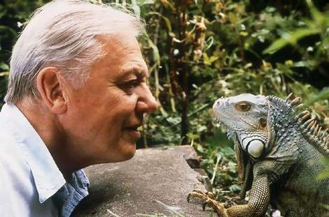 david attenborough mirando iguana - david-attenborough-