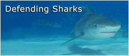 sea2 - SHARKWATER: Tiburón en las garras del hombre