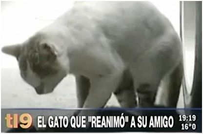 gato - gato reanima amigo