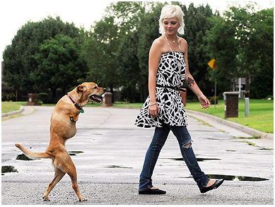 fe3 - fe el perro