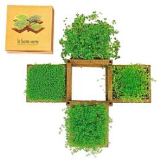 jardin comestible - Jardin Comestible