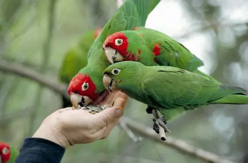 parrots and hand - parrots_and_hand