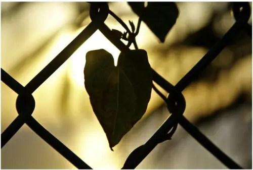 amor - Como superar una ruptura sentimental en 5 pasos