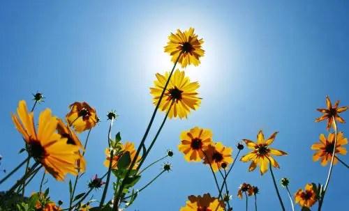 flores2 - flores