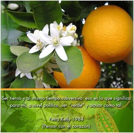 naranjas - Alternativas verdes para el cultivo de la naranja en la Comunidad Valenciana