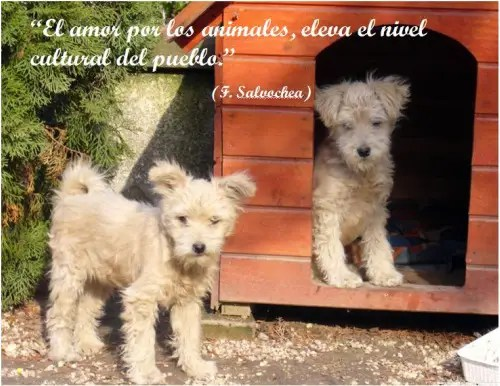 perros32 - perros3
