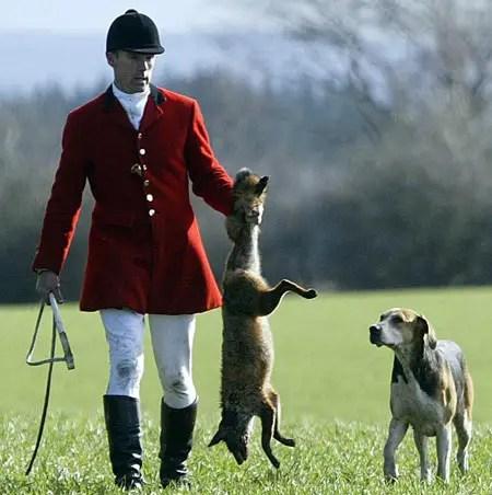caza del zorro - El significado profundo de las tradiciones con animales: zorros, toros, delfines y más