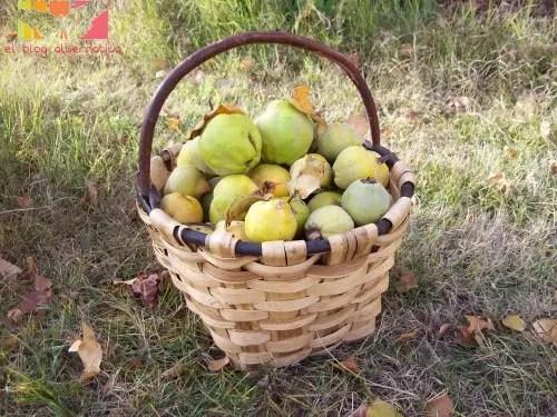 cesta de membrillos