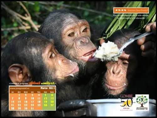 Calendario IJGE mar2011 10242 - Calendario-fondo de escritorio de Jane Goodall: marzo 2011