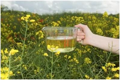 aceite - aceite vegetal