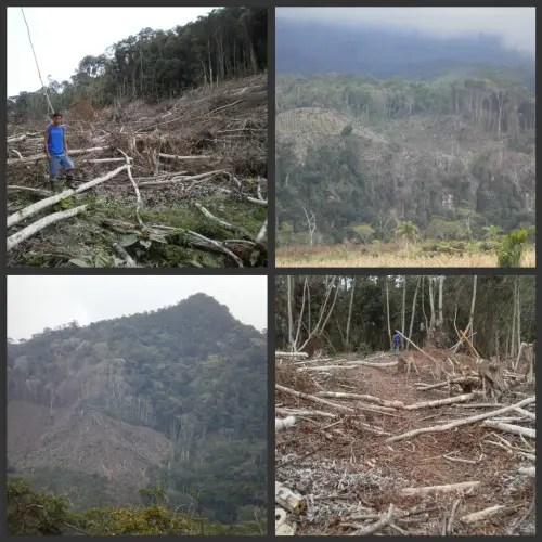 2collagedeforestacion2 - Crónica de mi viaje a Perú: el Amazonas, el pulmón del planeta (4/6)