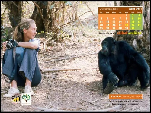 Calendario jane goodall abril 2011
