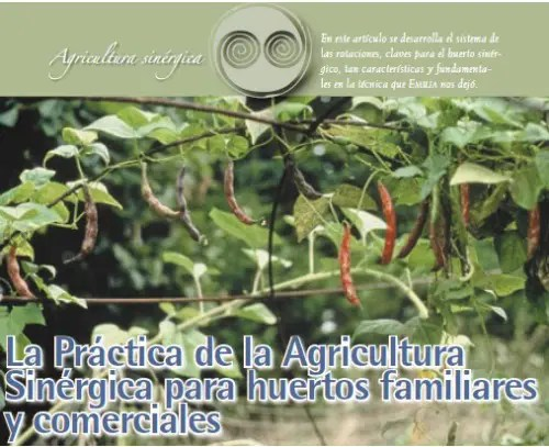 AGRICULTURA - AGRICULTURA SINERGICA