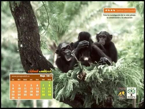 Calendario jane goodall mayo 2011