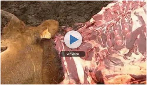 comer animales2 - ¿Por qué no comer perros?