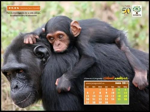 Calendario-IJGE-jun2011-1024b