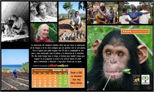 calendario jane - Calendario-fondo de escritorio Jane Goodall: diciembre 2011