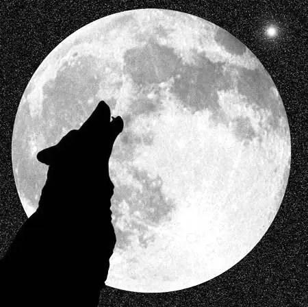 luna lobo