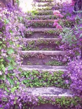 escalera vegetal violetab - SLOW LIFE: vivir de otra manera es posible. Entrevistamos a Cristina Rueda sobre proyectos de transformación social en torno a la vivienda y la comunidad