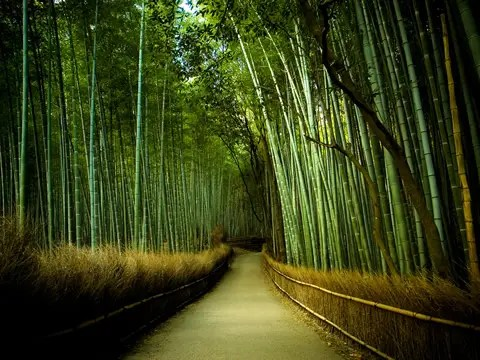 bambu - felxibilidad y felicidad