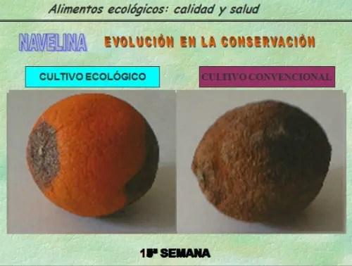biocultura3 - Diferencias entre los alimentos ecológicos y convencionales