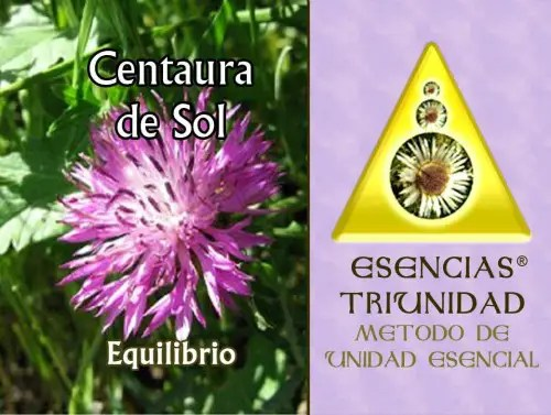 centaura - centaura