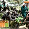 Calendario IJGE jul2011 1024 picnik - Calendario-fondo de escritorio Jane Goodall: julio 2011