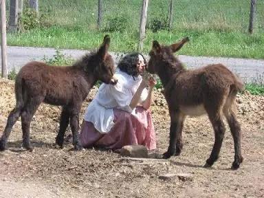 Laila del Monte animales - Laila del Monte - animales
