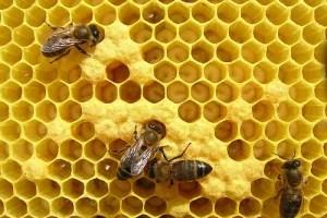 """abejas2 - Especial Las Abejas (2/3). Antoni Aresté, apicultor: """"las abejas se están muriendo precozmente"""""""