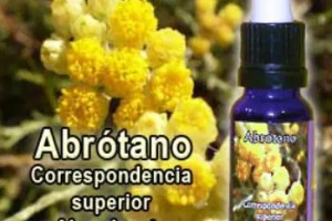 abrotano - Abrotano: esencia floral para la abundancia