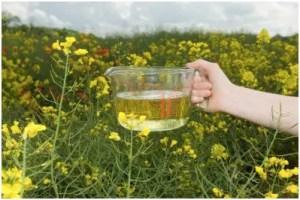aceite1 - Aceites y mantecas vegetales: el cuidado natural de nuestro cuerpo