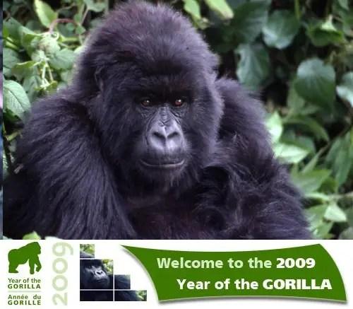 ano del gorila 2009 - Año del Gorila 2009
